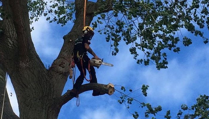 Tree Surgeons in Belbroughton