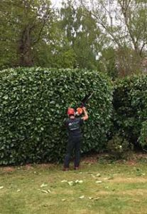 surgeon in Hedge Maintenance process