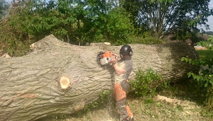 Tree Felling & Reductions