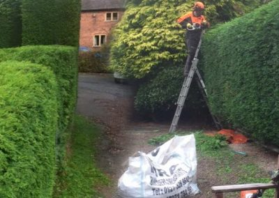 Hedge Maintenance in Process