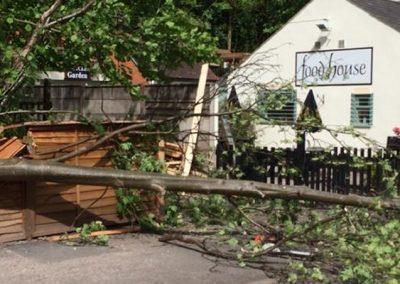 Slider Fallen Tree