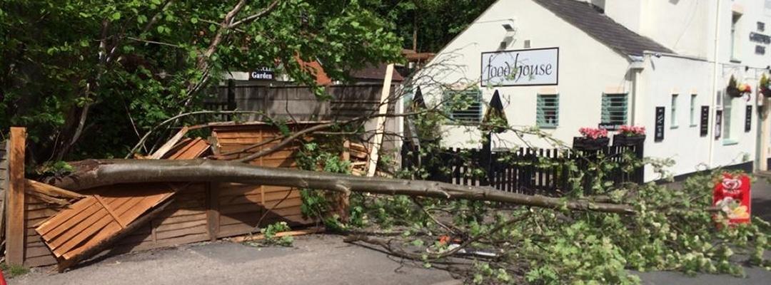 Fallen Tree on food house pub car park