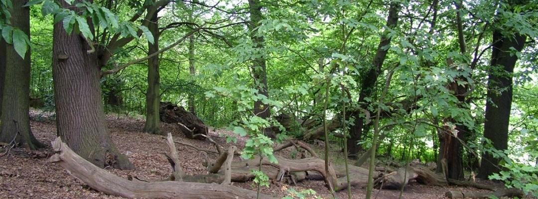 Slider Woodland Management