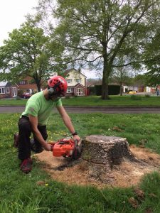 Starting to Remove a stump