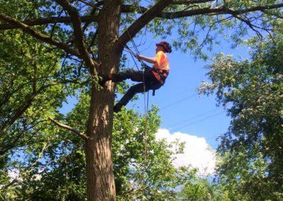 The Tree Doctors (10)