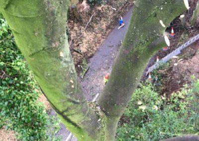 The Tree Doctors (2)