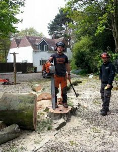two surgeons after tree removal. one standing on stump