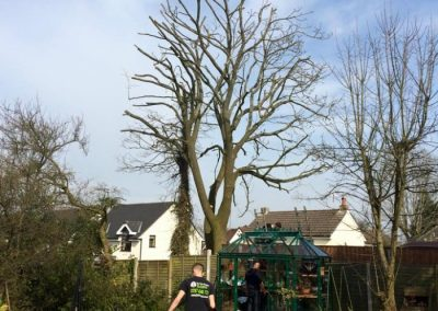 The Tree Doctors (7)
