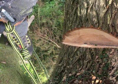 Tree Surgery 2