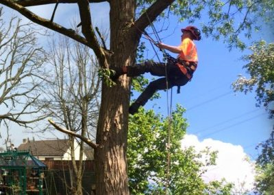 Our Tree Surgery Work