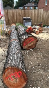 Tree logs on floor, markered with red spray paint