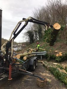 crane collecting tree logs