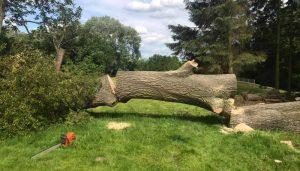 tree felling , after, in half on field