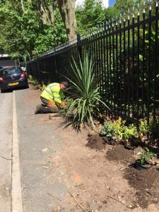 surgeon planting next to a steel black fence