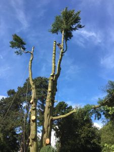Tree Felling & Reductions