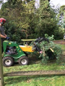 Tree Purning