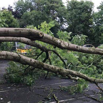 highway clearance , tree fell across carpark