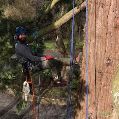 tree surgeon hanging from tree on harness