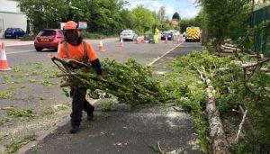 Storm Damage tree fallen onto path