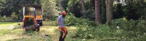 Woodland Management, surgeon removing trees from ground
