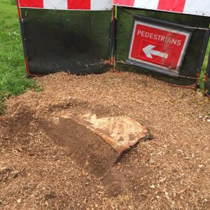 Stump Removal in Progress, pedestrian sign set up