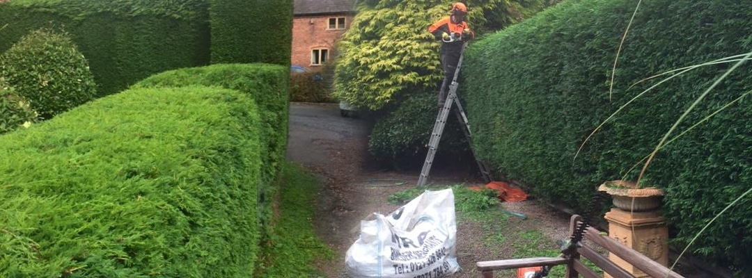 Hedge Maintenance Job 2