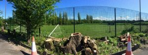 Dead Wooding and Pruning trees