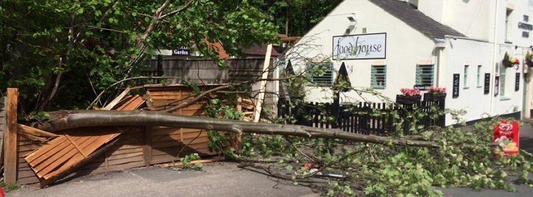 Fallen Tree on food house pub car park