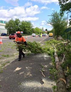 removal of tree from pavement