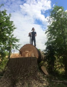tree surgeon standing on top of tree stump after taken down