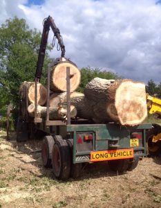tree logs on the back of long vehicle