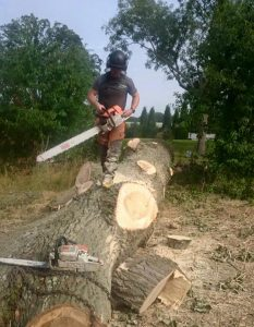 surgeon mid process of tree cutting