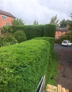 hedge maintenance front of house