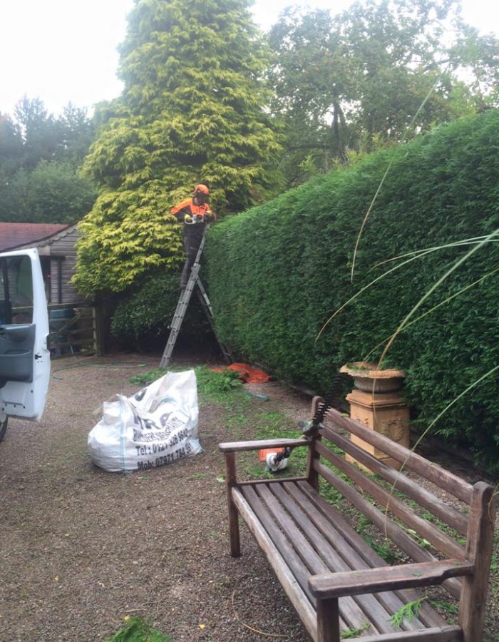 hedge maintenance next to a wooden bench