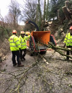 surgeons adding cut down trees into tree grinder