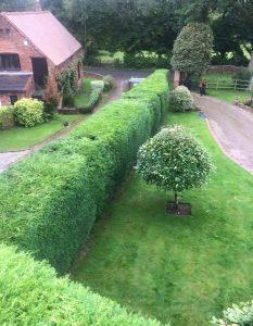 The Tree Doctors Garden Maintenance. complete hedge