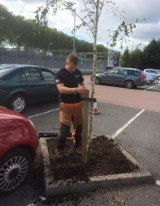 surgeon planting new tree on car park