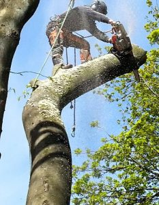 tree surgeon - high up - mid cut with hand saw