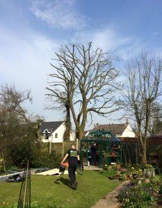 back garden tree removal