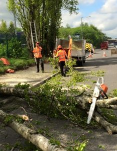 tree removal on road mid process