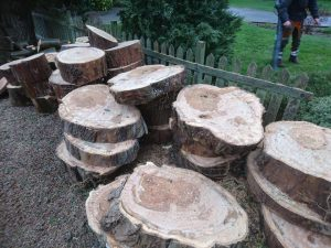 tree stumps stacked against wooden fence