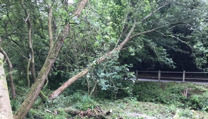 fallen tree on to road