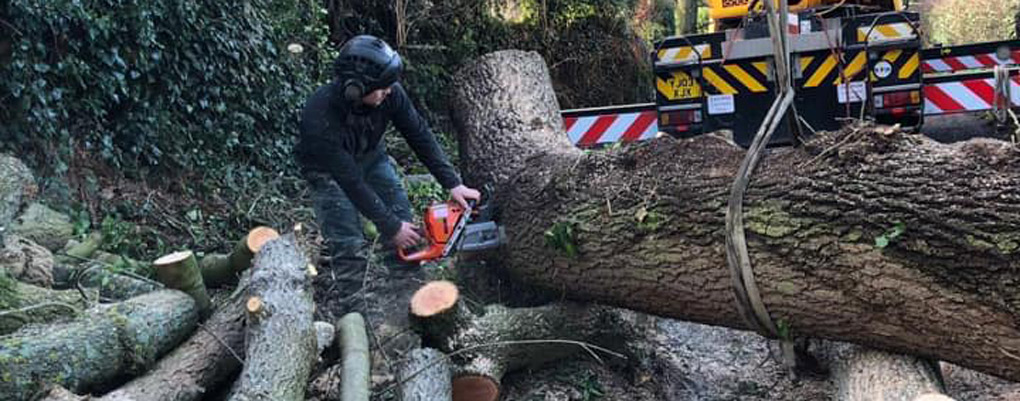 tree surgeon with saw, tree felling