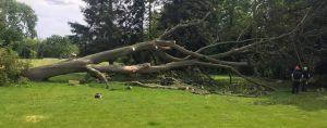 tree felling, tree after been cut down - on field