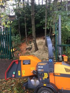 Dead Wooding & Pruning