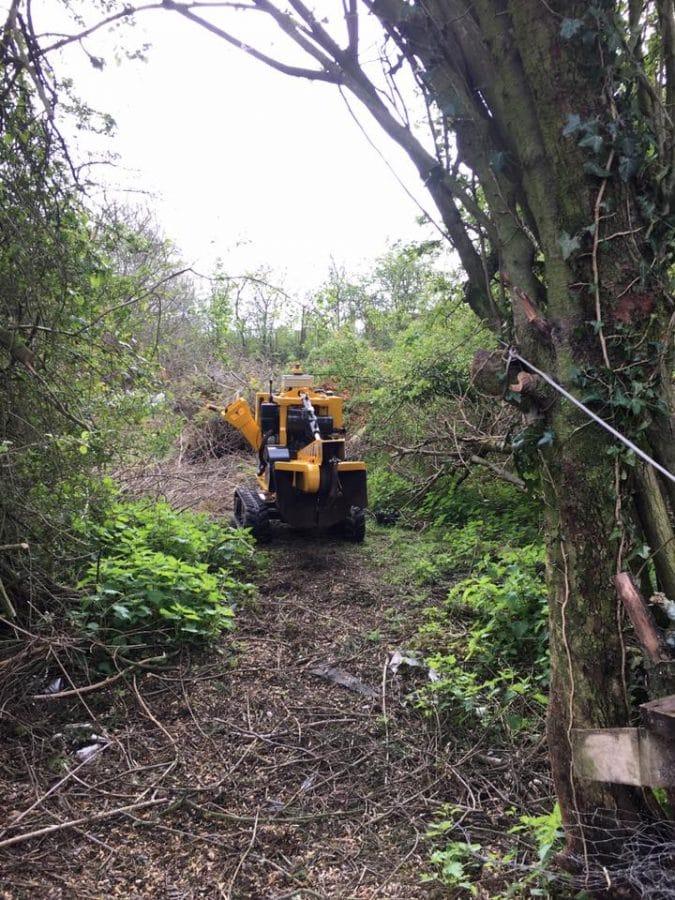 Woodland Management