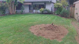 After stump grinding, grass garden with dirt patch