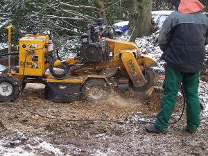 stump grinding process, yellow carlton machine