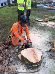 surgeon stump grinding with hand saw