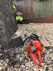 tree felling, red saw - tree half complete